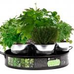 Tentation Gourmande – Plateau de 7 aromates à faire pousser Nature & Découvertes
